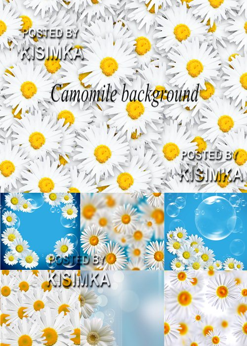 Stock Photo: Camomile background