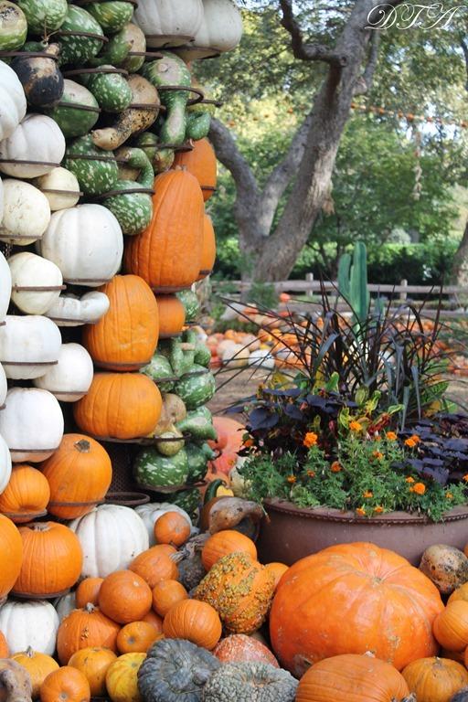 Pumpkins Arboretum 066
