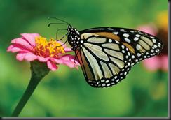 Monarchs of Iowa