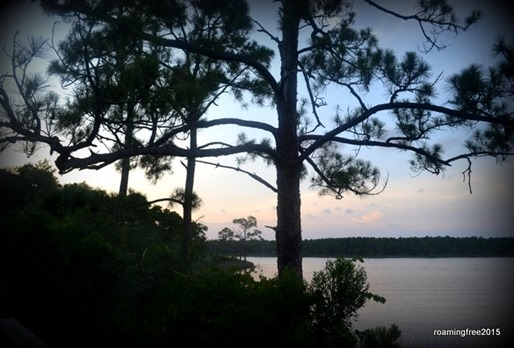 Pines along the lake