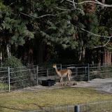 43_Rosensteinpark_18. Februar 2016.jpg