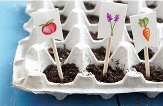 Piantare semini