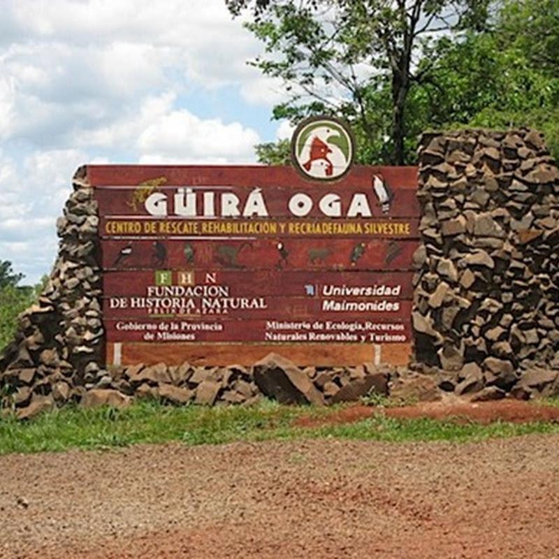 Centro de Recuperación y de Recría de Aves Amenazadas Güirá Ogá, en pleno corazón de la selva misionera.