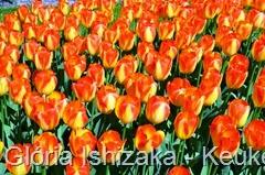 Glória Ishizaka - Keukenhof 2015 - tulipa 17