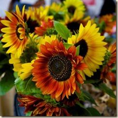 Flowers-Byng