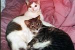 My cats, Muffin (Muffy) (1988-2003) and Scruffy (1988-2009).