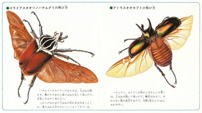 3_testo giapponese (FILEminimizer)