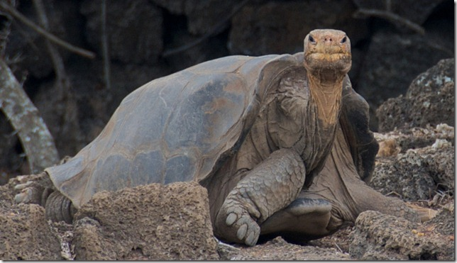 lonesome-george