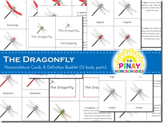 Dragonfly 3-part nomenclature cards