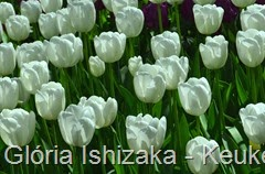 Glória Ishizaka - Keukenhof 2015 - tulipa 37