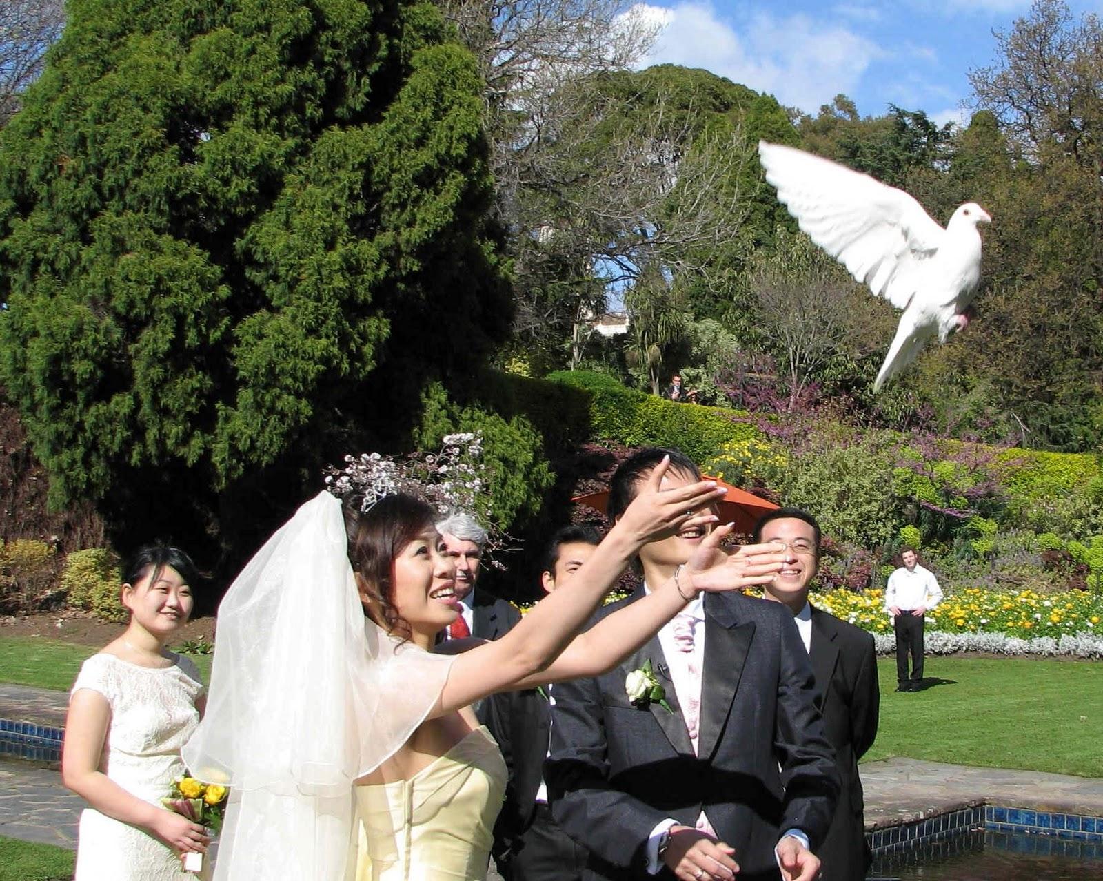 a beautiful white dove