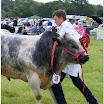 cattle14.jpg