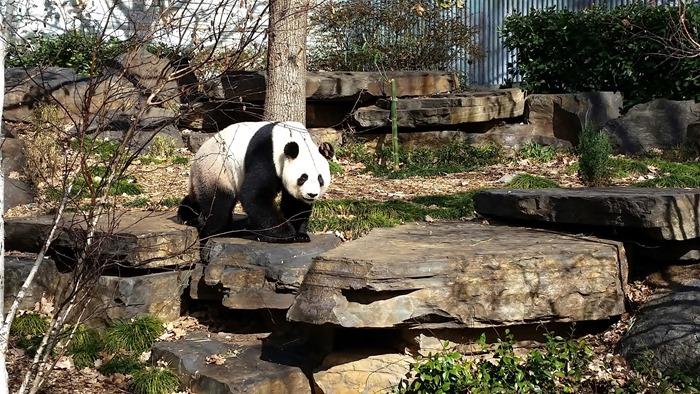 virtù - panda