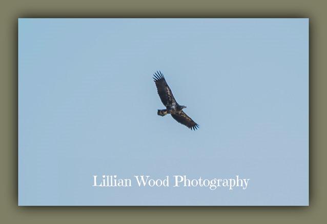 NOVEMBER 2015 Eagle (1 of 45)