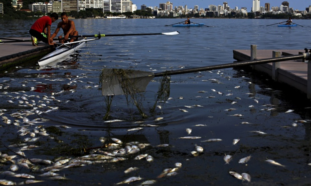 Dead fish float next to a rowing boat in the 2016 Olympic venue. In one week in April, 42.9 tonnes of dead fish were retrieved from the lake that is due to host the rowing events for the 2016 Rio Olympic Games. Photo: Ricardo Moraes / Reuters