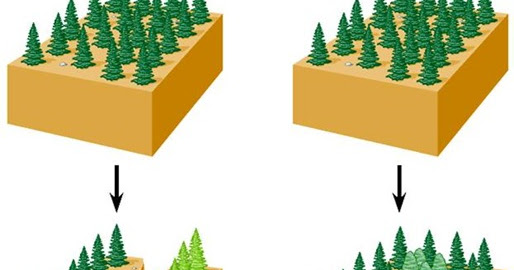 allopatric and sympatric Allopatric speciation is a one species separate and form two different population eg: a canyon forms a physical barrier so it separate them sympatric is.