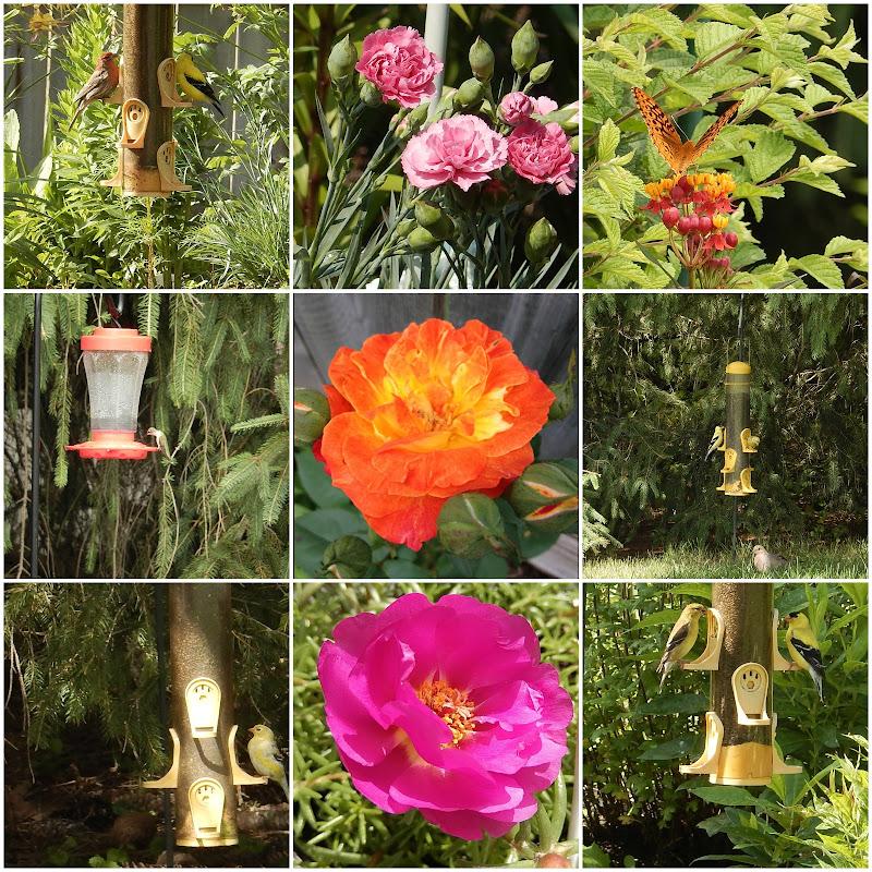 Garden Collage 2015