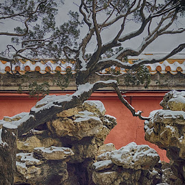 Forbidden City by Francisco Little - City,  Street & Park  City Parks ( snow, karst, forbiddencity, beijing, wall, china )