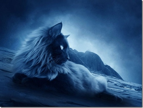 1123cute-cats-wallpapers-background-44