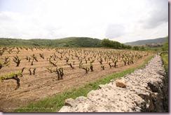 vigneti-Cannonau-Sardegna-Montisci-640x426