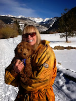 Lovely smart sweetheart Gorgeousdoodle, in Vail Colorado.
