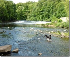 12 weir stream kirklees