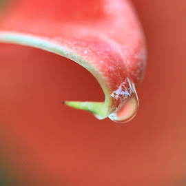 First drop  by Pamela Zeng - Nature Up Close Natural Waterdrops
