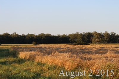 August 2 Field