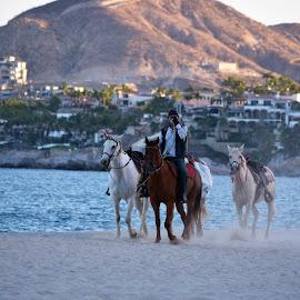 by Tesla Konold-Hahn - Animals Horses
