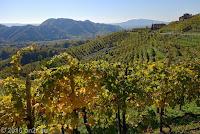 Weinbaugebiet bei Valdobbiadene.