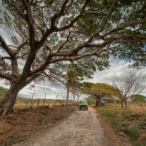camino chorrotego by Annette Flottwell - Landscapes Prairies, Meadows & Fields ( campo, sabana, guanacaste, lenstagger, las palmiras, cañas, venus 12mm,  )