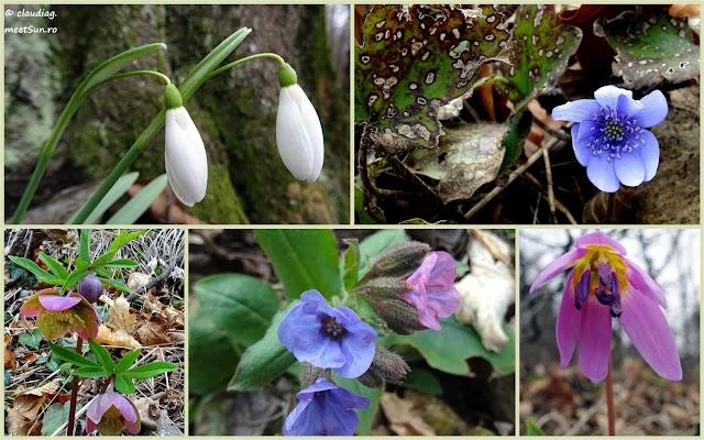 colaj-flori-februarie-rw.jpg