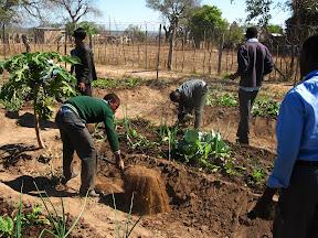 Here's some kids working in the school garden.