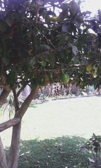 SINGOSARI (35)
