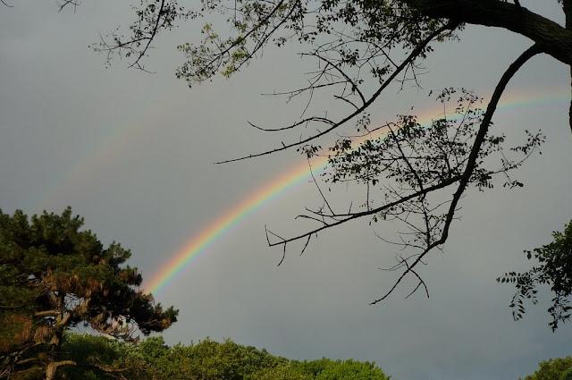 霓 + 虹
