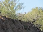 1st sighting of owl - 4/14