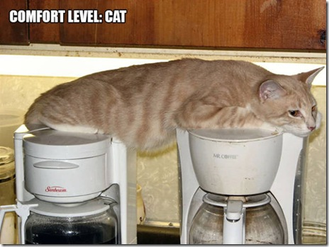 funny-cats-033