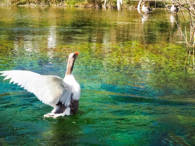 river-akyaka-turkey-holiday-lifestyle-blog