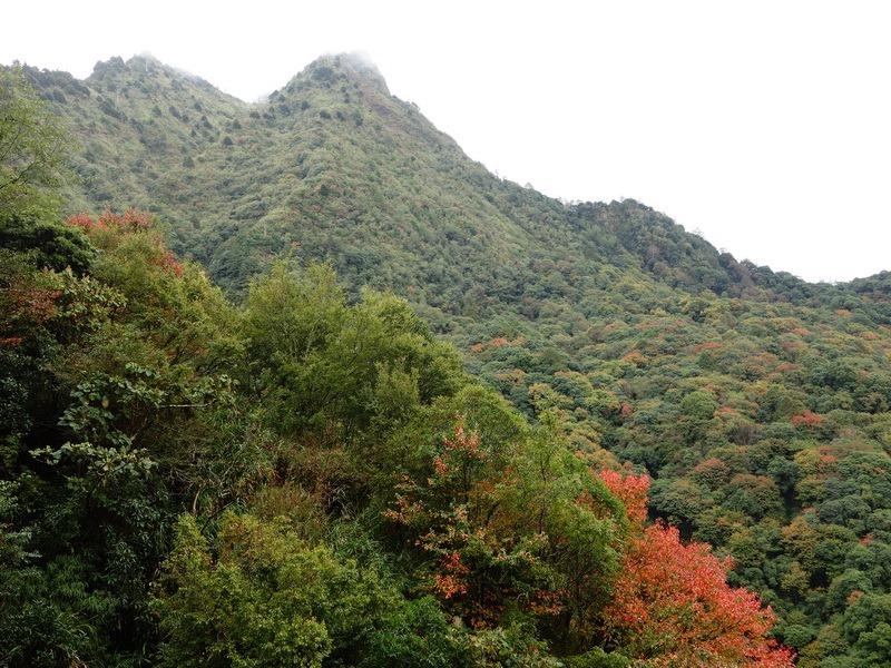 2013_1126-1129 鹿林山-1_186