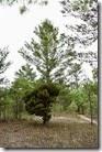 Strange tree growth 2