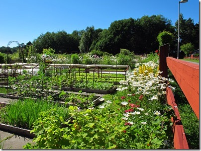 Local public vegetable gardens, Stockholm photo by susan wellington