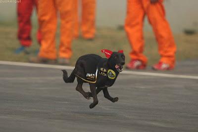 фотошоп собака Lotus Renault на трассе Буддх на Гран-при Индии 2011