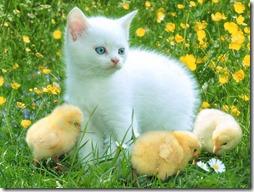 77- gatos blanco o crema (12)- buscoimagenes