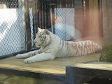 TIGERS Preservation Station - Myrtle Beach - 040510 - 13