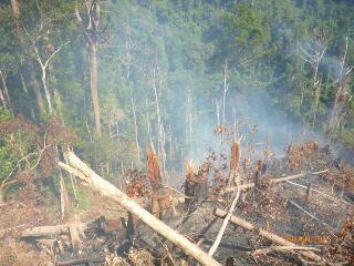 Hutan di Bakar