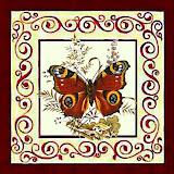 borboletas (67).jpg