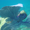 Buck Island Reef - IMGP1060.JPG
