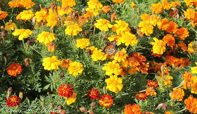 Pumpkins Arboretum 040