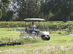 Tristan helping replant new block 7-2012