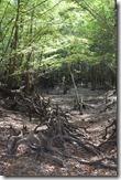 Cypress tangle